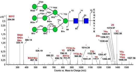 Spectre MSMS inférant la structure d'un glycane complexe porté par une séquence peptidique.