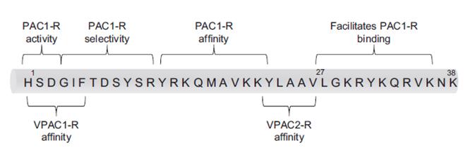 Structure primaire du PACAP montrant les régions interagissant avec différents récepteurs.